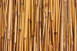 bambou_bois_tige