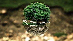 ecologie_arbre_verre